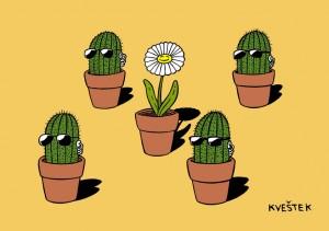 kaktusi-i-cvijet boja